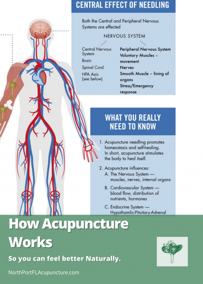 how-acupuncture-works-graphuc